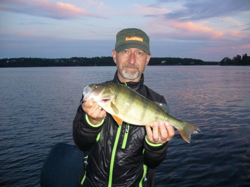 Peder_Wigdell_2016_Perch_40.5_920