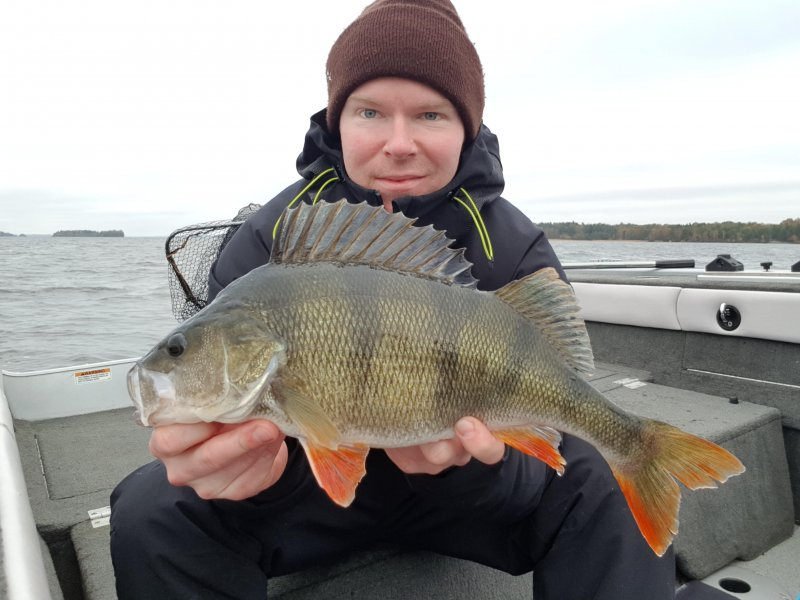 Samin_Saarinen_2018_Perch_45_1300